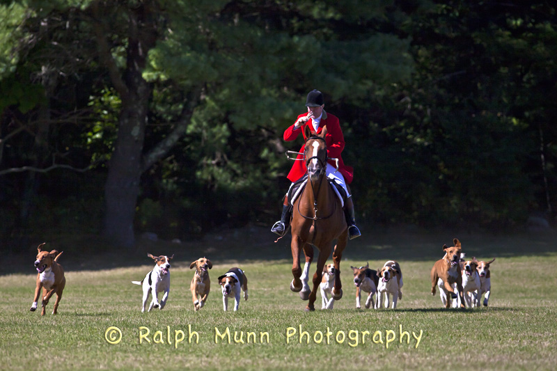 Hounds On The Hunt