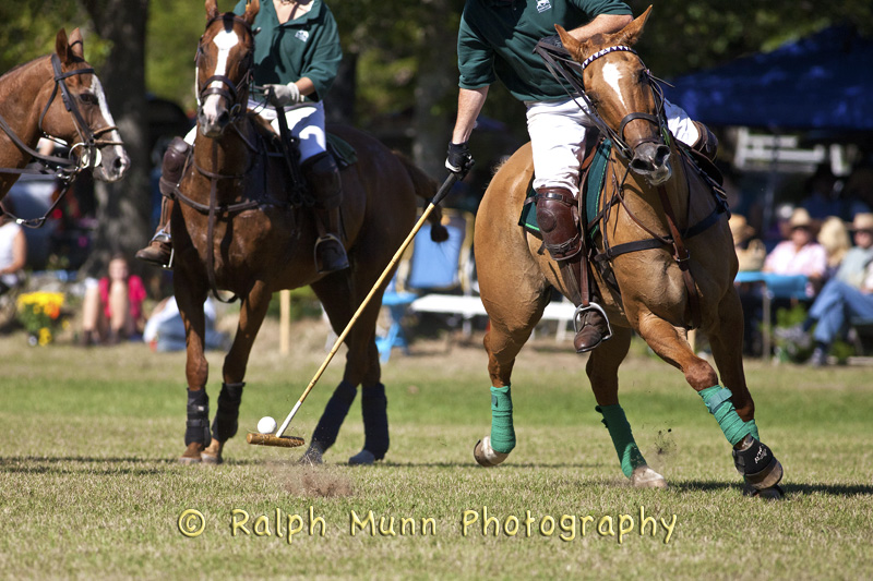 Polo, The Sport Of Kings!